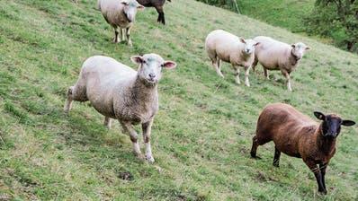 Interessengemeinschaft für Schlachtung im Hinterthurgau gegründet