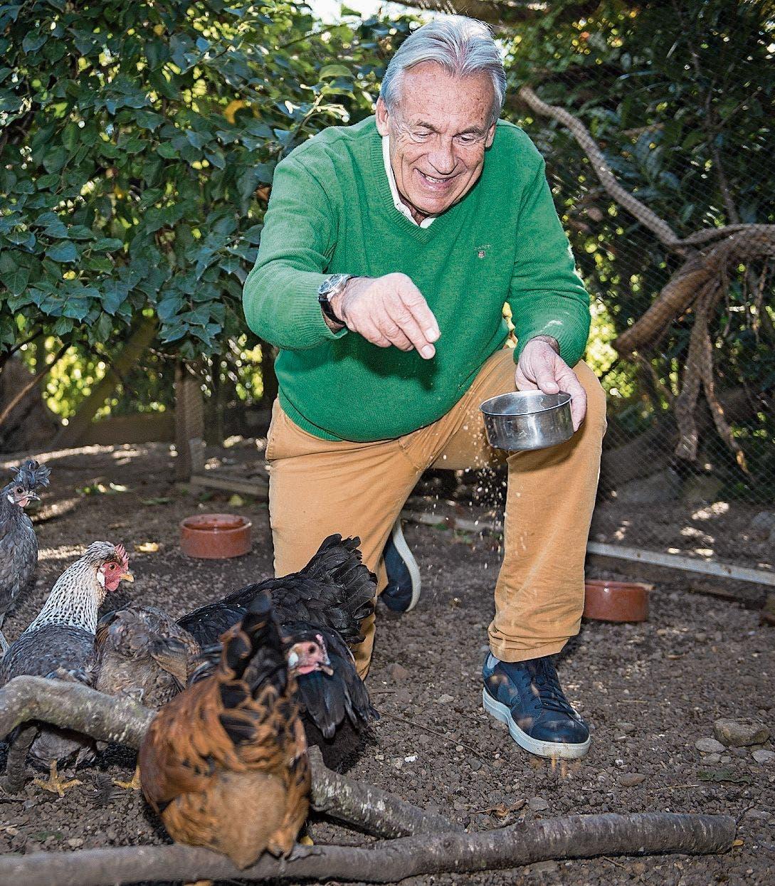 Wann immer er Zeit hat, füttert Pepe Lienhard seine Hühner und Kaninchen, und er mistet auch ihre Ställe aus. (Bild: Reto Martin (25. Sept. 2018))