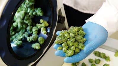 Die Produktion und der Verkauf von Marihuana ist in Kanada ab sofort legal. (Bild: Ted S. Warren/AP (25. September 2018))