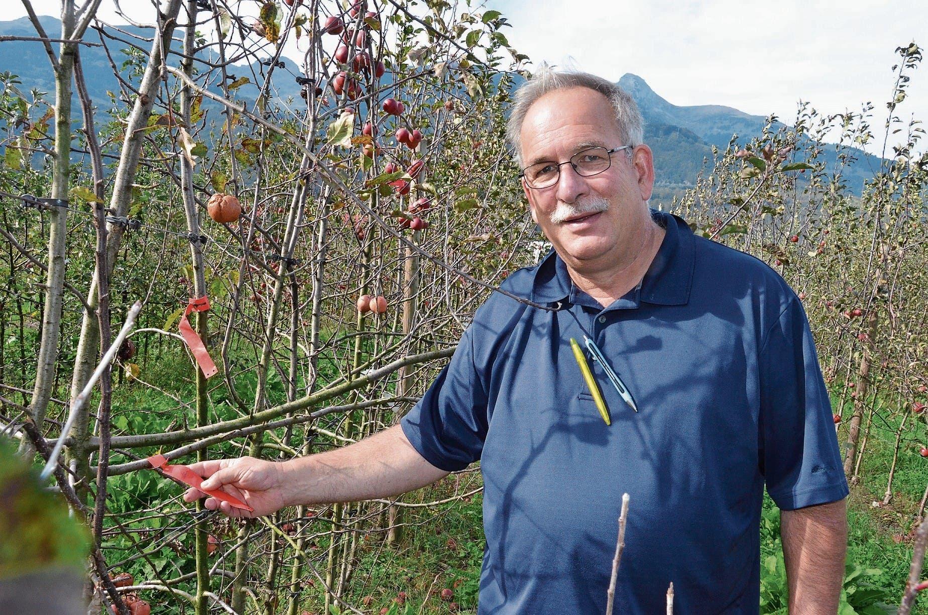 Die Selektion von Pflanzen, mit denen weitergezüchtet wird (im Bild die Apfelbäume mit roter Etikette), gehört zu den Hauptaufgaben von Markus Kobelt, Inhaber und Gründer von Lubera. (Bild: Bilder: Katharina Rutz)
