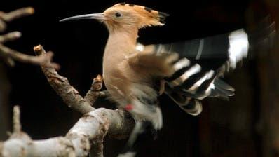 Kleinst-Logger enthüllt Überraschungen aus Zugvogel-Leben