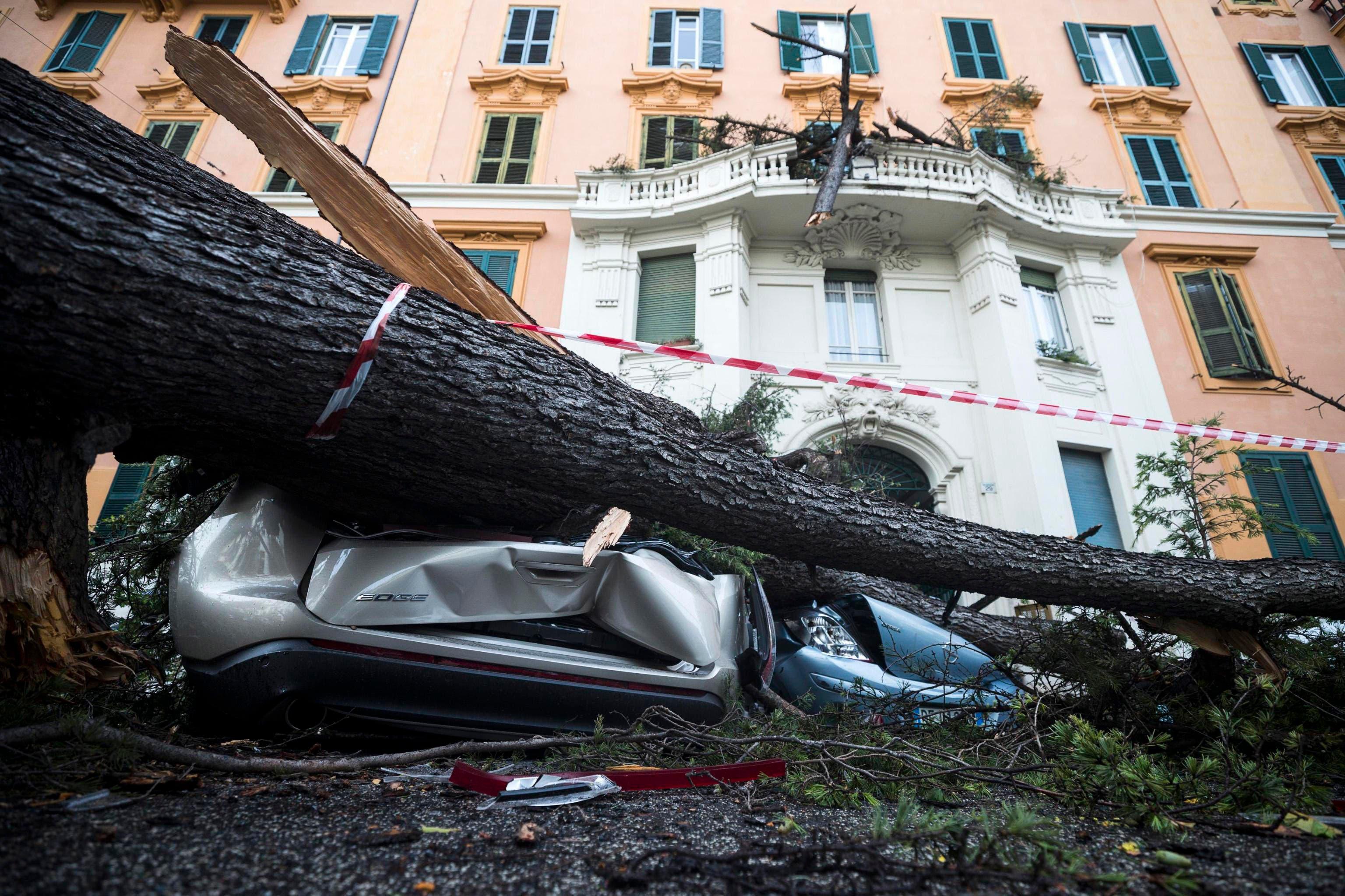 In Rom zerstörte ein umgestürzter Baum mehrere Autos. (Bild: Angelo Carconi/ANSA via AP (29. Oktober 2019))