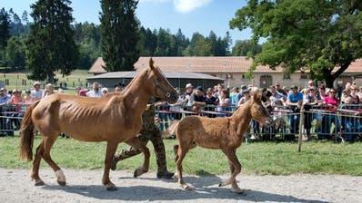 Mit der Versteigerung der Pferde aus Hefenhofen wurden im August 2017 vorab die Kosten der Behörden gedeckt. (Bild: Karin Hofer/NZZ)