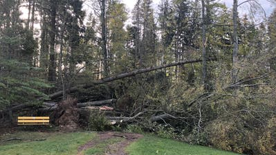 Über dem Wanderweg im Gebiet Höggwald in Stein liegen umgeknickte Bäume. (Bild: pd)