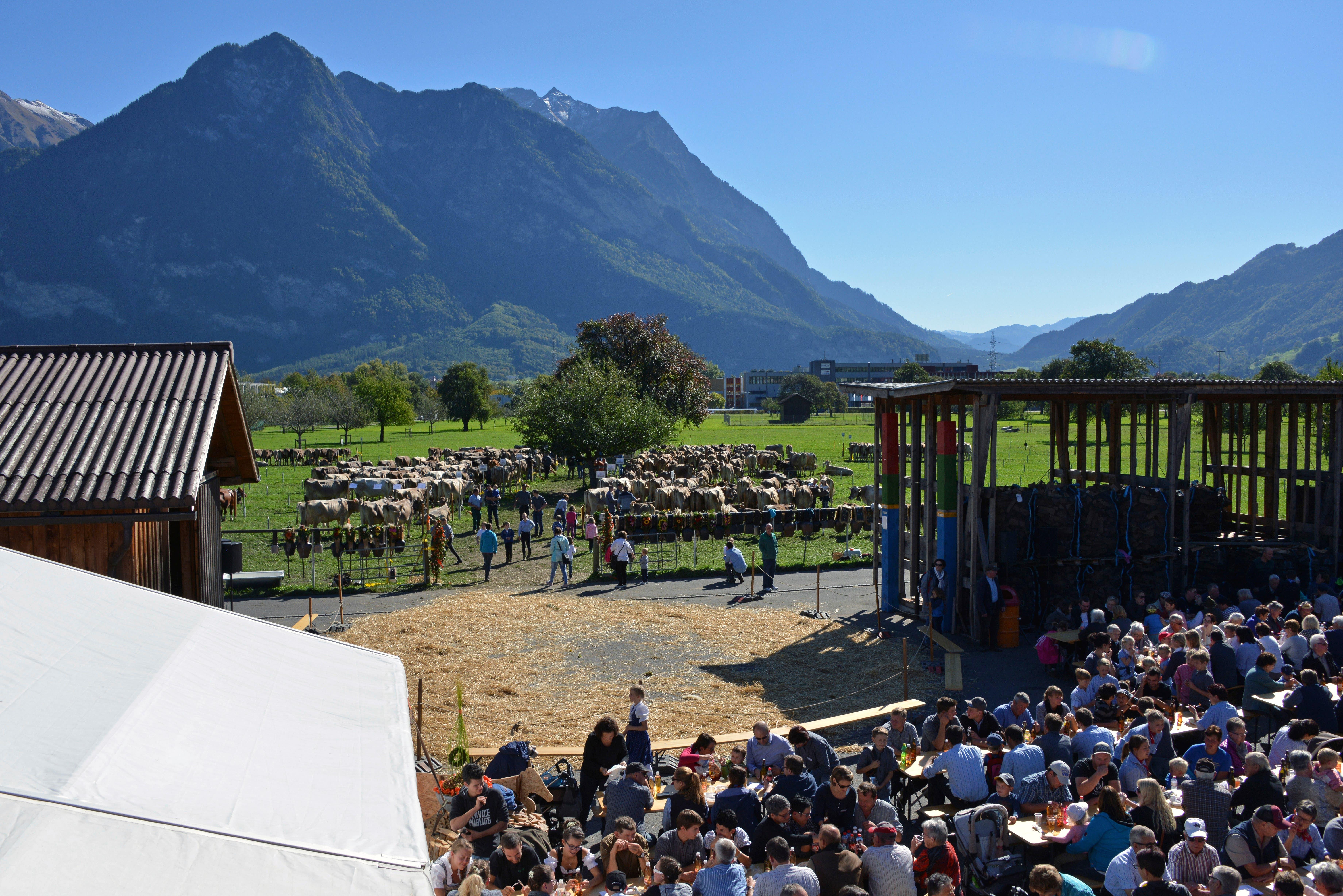 Traumhaftes Wetter, anspruchslose Tiere und fröhliche Besucher gehörten zur diesjährigen Viehschau. Bild: Mario Viecelli)