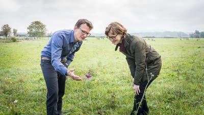 Matthias Künzler und Andrea Näf-Clasen erfreuen sich einer Flockenblume. (Bild: Andrea Stalder)