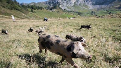 Tierrechtler fordern strengere Strafen für Tierquäler