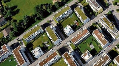 Begrünte Flachdächer in St.Gallen-Winkeln. (Bild: Hanspeter Schiess)