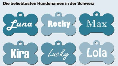 Wo in der Ostschweiz am meisten Hunde leben und wie oft sie im Kanton St.Gallen zubeissen