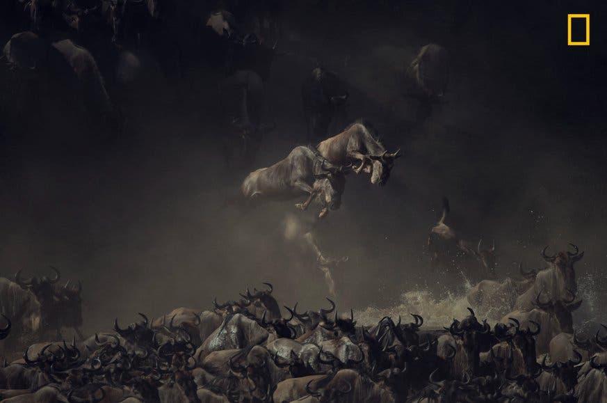 «Es war früh am Morgen, als ich die Gnus den Mara-Fluss in Tansania queren sah.» (Bild: National Geographic/Pim Volkers)
