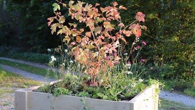 Eine der Pflanzenboxen, die der Unternehmerverband der Thurgauer Gärtner vermietet. (Bild: PD)