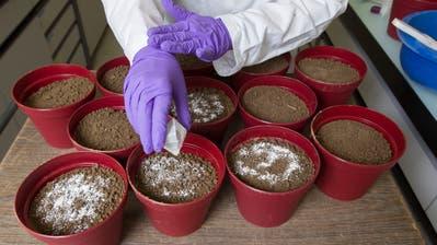 Ab 2026 muss der Phosphor schweizweit aus dem Klärschlamm zurückgewonnen werden; das Granulat kann als Dünger eingesetzt werden. (KEYSTONE/Peter Klaunzer)