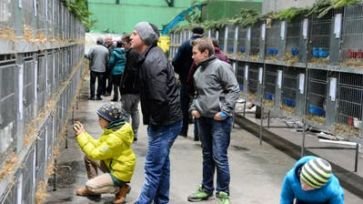 Das Publikum zeigt grosses Interesse an der Kleintierausstellung in Buchs. (Bilder: Hansruedi Rohrer)