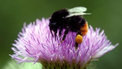GESUNDHEIT: Neues Messsystem für Polleninformation