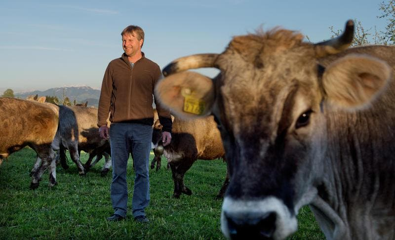 Landwirt Urs Amrein inmitten seiner Herde Rätischen Grauviehs auf dem Neuhof in Hildisrieden. (Bild: Eveline Beerkirecher)