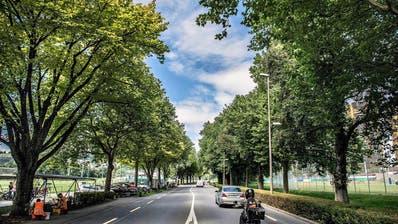 BÄUME: Stadt Luzern bevorzugt südländische Bäume
