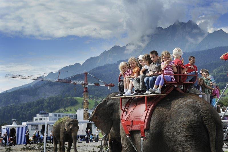 Fröhliche Kindergesichter beim Elefantenreiten im Jahr 2011 auf der Luzerner Allmend. (Bild: Maria Schmid / Neue LZ)