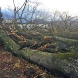 WETTER: «Burglind» verursacht Waldschäden im ganzen Kanton Luzern
