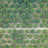 LANDWIRTSCHAFT: Palmöl gefährdet den Freihandel