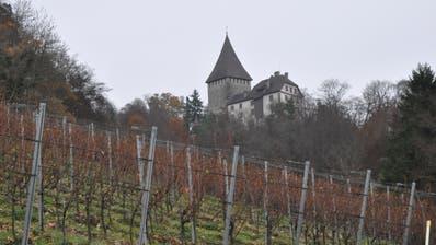 Durch die Weinfelder Reben