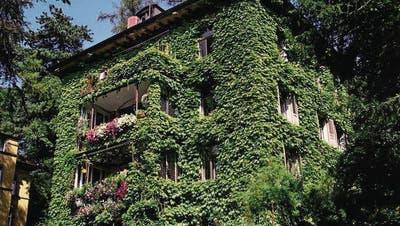 Grüne Fassaden für gutes Klima