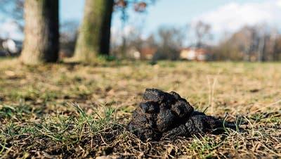"""EGGERSRIET: """"Es ist eine Sauerei"""": Hündeler lassen Kot ihrer Vierbeiner überall liegen"""