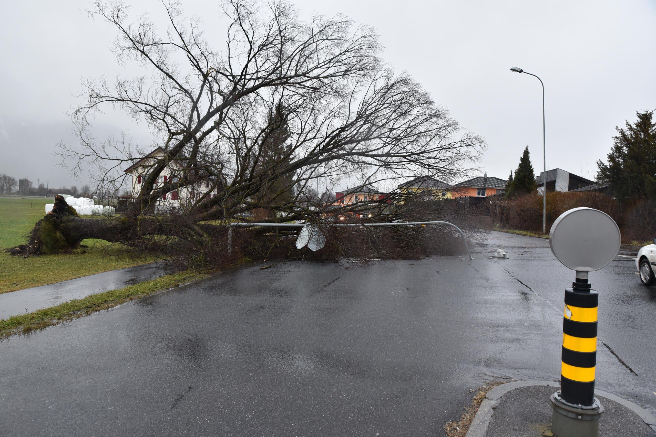 In Haag wurde ein grosser Baum entwurzelt. Er riss eine Laterne samt Strassenschildern mit sich und landete auf der Kantonsstrasse. Eine Fahrspur blieb trotzdem frei, so dass der Verkehr bis zu den Bergungsarbeiten langsam passieren konnte. (Bild: Heini Schwendener)