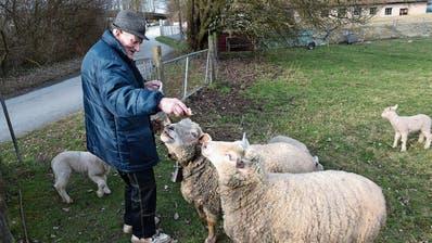 SALMSACH: Nach brutaler Attacke auf seine Lämmer: Salmsacher Schafhalter wappnet sich für die Osterzeit