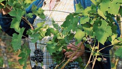 NEUNFORN: Drei Tage Weinfest im Fahrhof