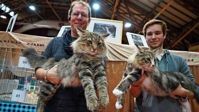 FRAUENFELD: Katzen auf dem Catwalk