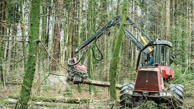PFYN: Viel Holz für die Hütte