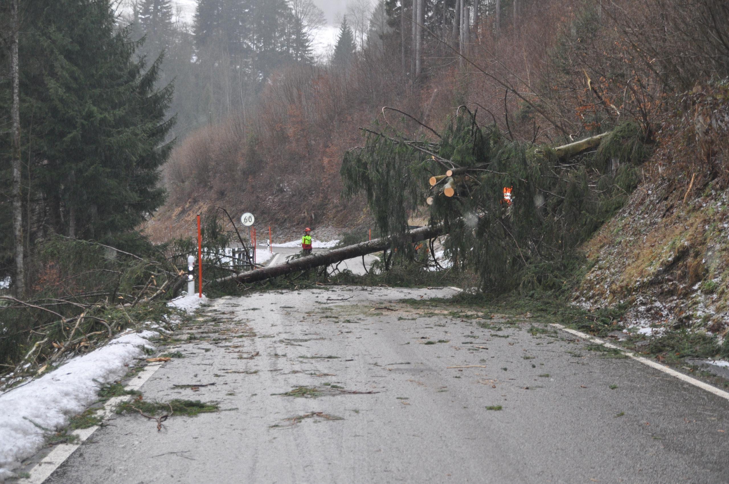 Bei der Kantonalen Notrufzentrale der Polizei in Herisau gingen verschiedene Meldungen über umgestürzte Bäume ein. ein Baum in Schwellbrunn versperrte gar die Strasse. (Bild: Kapo AR)