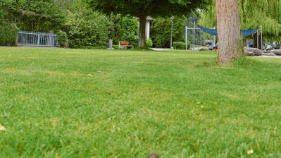 BERLINGEN: Die Hundekacke ist am Dampfen