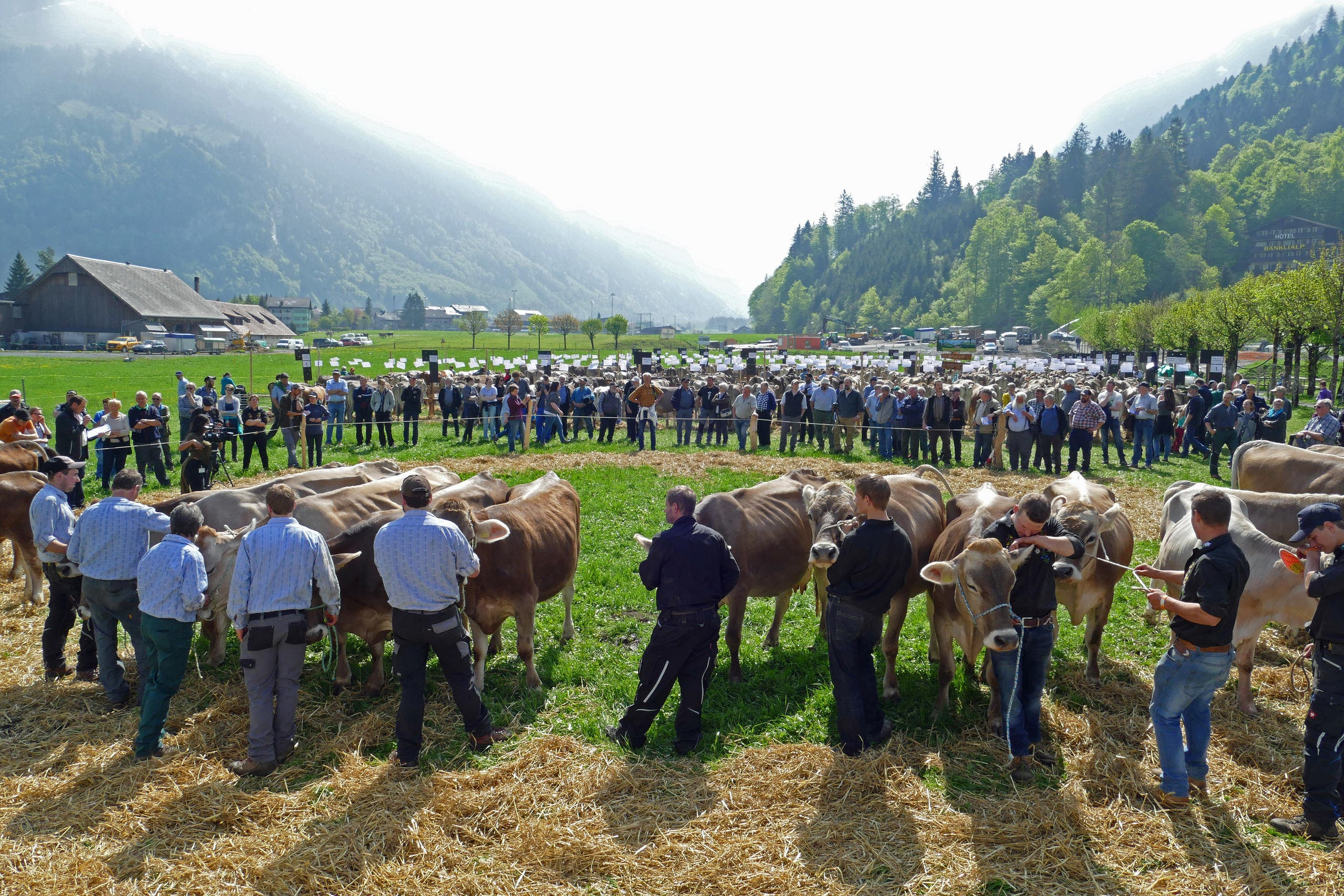 Präsentation der Zuchtfamilien auf dem Viehschauplatz beim Sporting Park Engelberg. (Bild: Beat Christen)