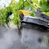 Wasser soll Herbizide im Rebbau ersetzen