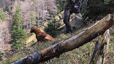 Wildhüter Urs Büchler und seine Hündin Luna im Auerhuhngebiet. (Bild: Sabrina Stübi)