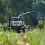 Ein Bauer bei derErnte auf einem Maisfeld. Aus dem Mais wird Viehfutter produziert.(Bild: Dominik Wunderli; Ufhusen, 10. September 2015)