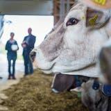 Thurgauer Bauern öffnen die Hoftüren