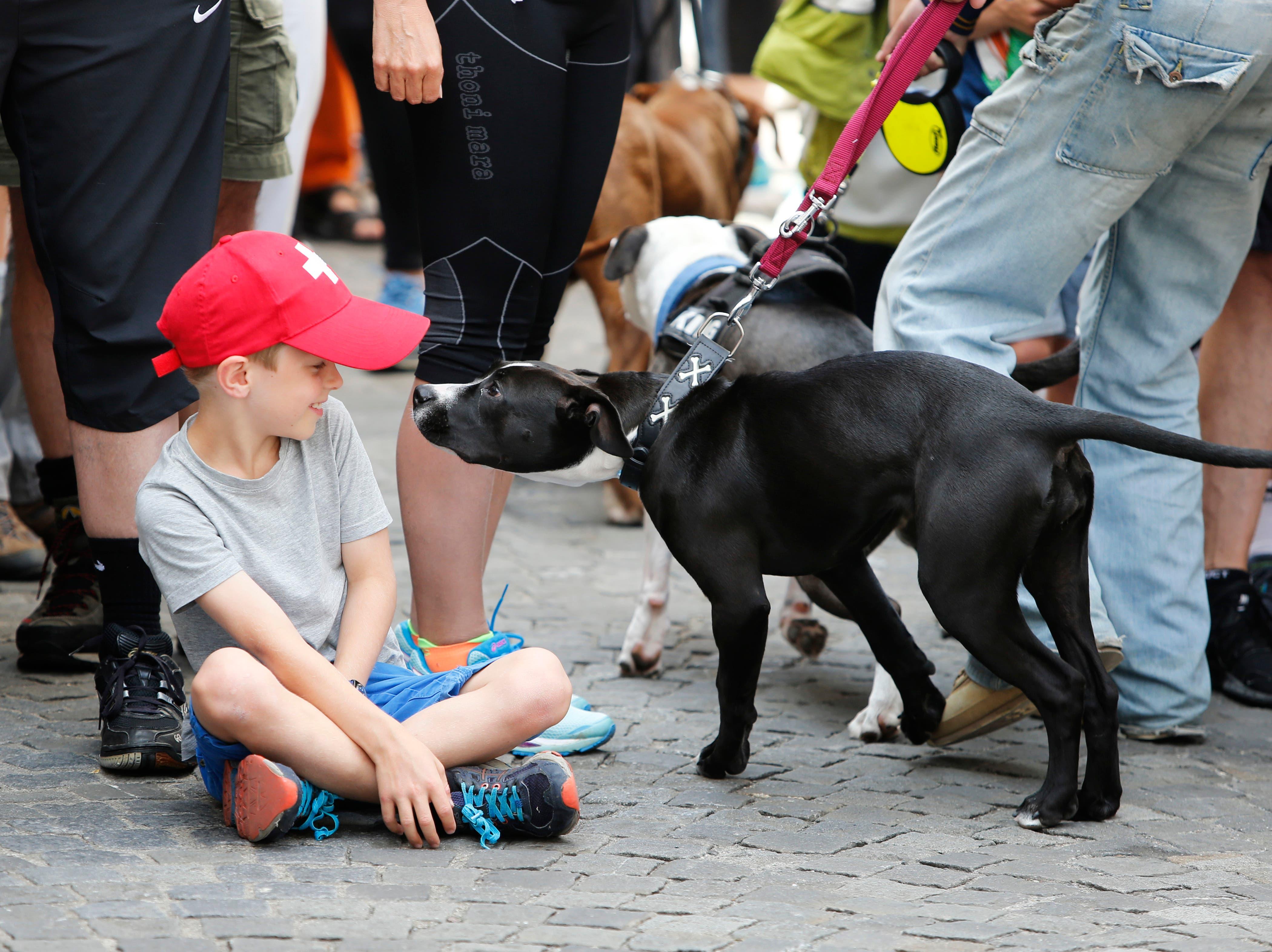Kind und Hund auf Tuchfhühlung. (Bild: Stefan Kaiser (Zug, 25. Juni 2018))