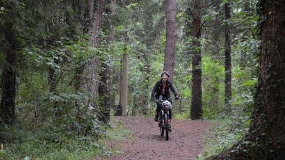 Wald trotz lauter Bäumen sehen