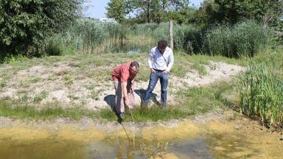 Gemeinderat Hansjörg Hauser und Markus Bürgisser von Pro Natura schauen sich die Tümpel rund um den Ägelsee an. (Bild: Nicole D'Orazio)