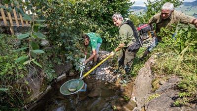 Im Kanton Luzern werden Fische gerettet