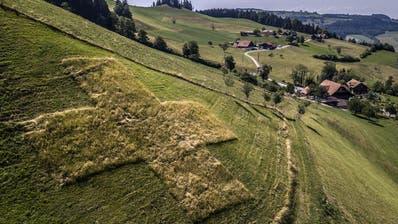 Ein Familienwerk: Das gemähte Kreuz ob dem Bachhof in Schwarzenberg. (Bild: Pius Amrein (Schwarzenberg, 30. Juli 2018))