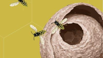 Wespenplage: Sie lassen uns nicht im Stich