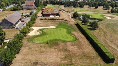 Auf dem Golfplatz Lipperswil herrscht Dürre: Lediglich die Greens sind noch wirklich grün - der Rest ist braun vor Trockenheit. (Bilder: Reto Martin)