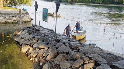 Diessenhofer Fischer siedeln Fische um