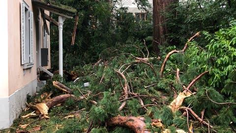 Der Blitz schlug in diesen Baum ein (Bild: Roman Hodel)