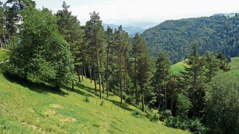 Letzter Waldentwicklungsplan des Toggenburgs liegt öffentlich auf: Der Regionalförster nimmt Stellung