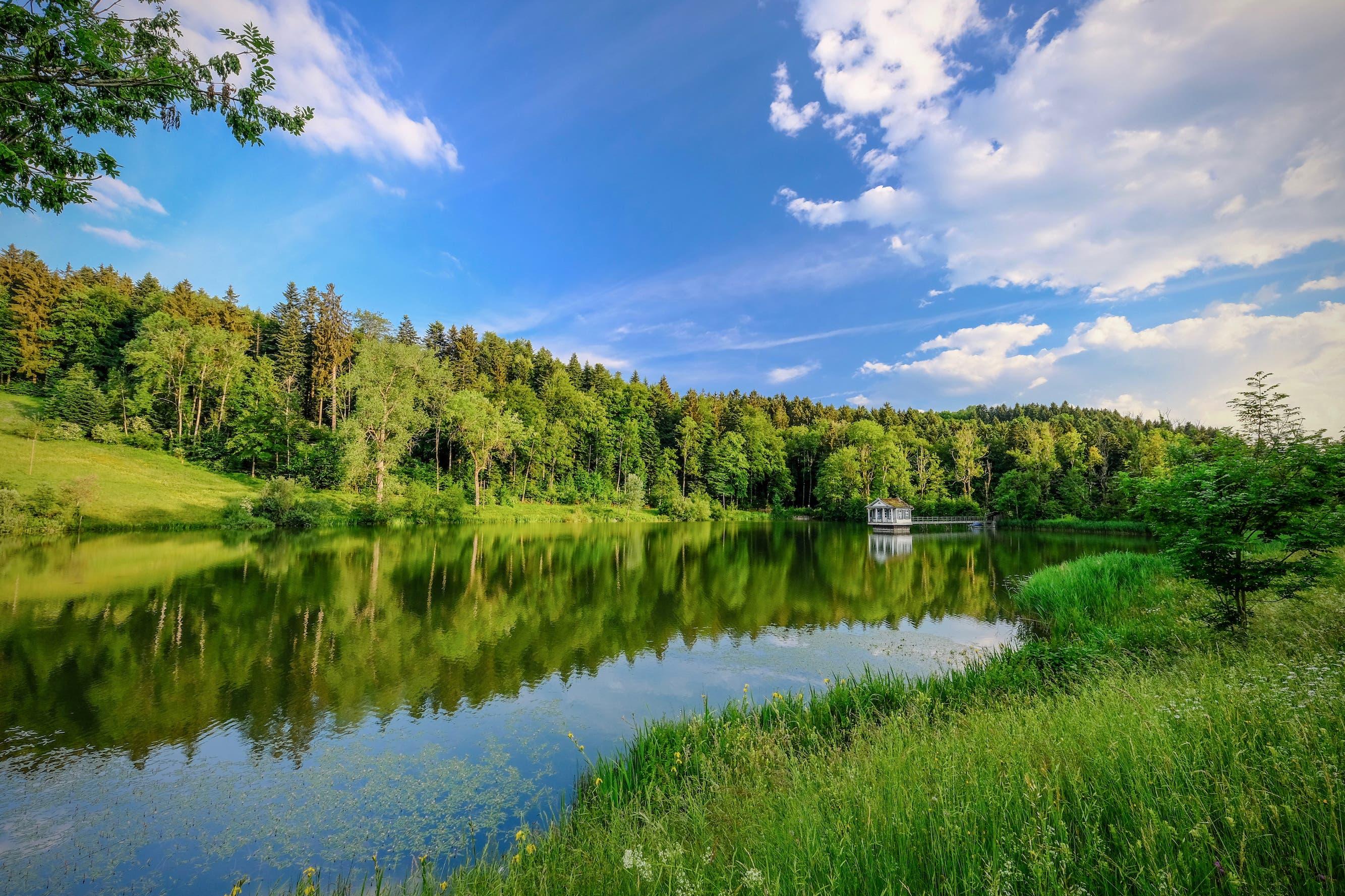 Das Umland des Wenigerweiers ist eine grüne Oase für viele Pflanzen und Tiere. (Leserbild: Luciano Pau - 7. Juni 2018)