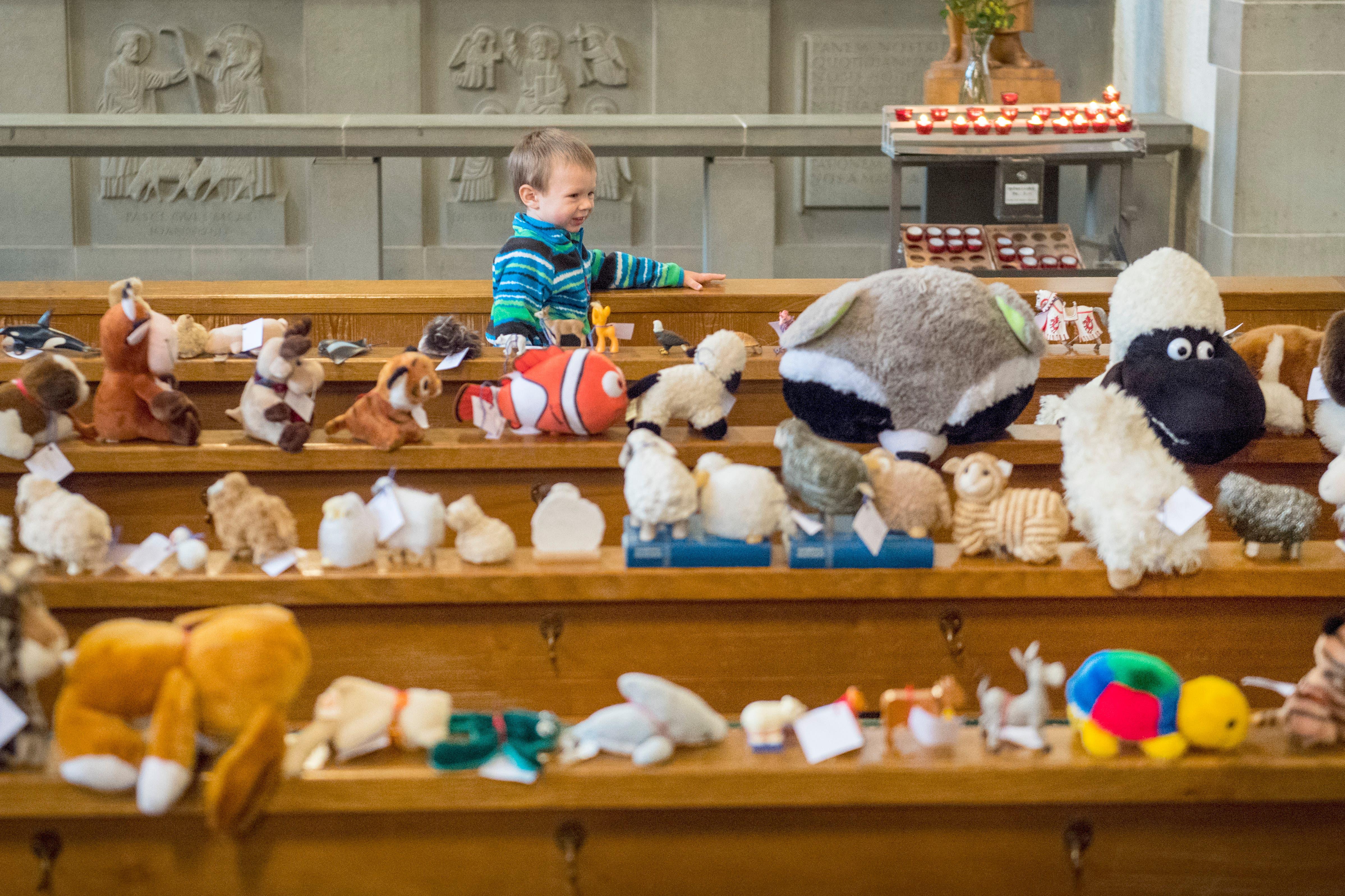 Die Vielfalt an Plüschtieren in der Dreifaltigkeitskirche ist überwältigend: Im Bild sind unter anderem der Shawn, das Schaf, und Nemo, der Trickfilm-Clownfisch, zu erkennen. (Bild: Urs Bucher)